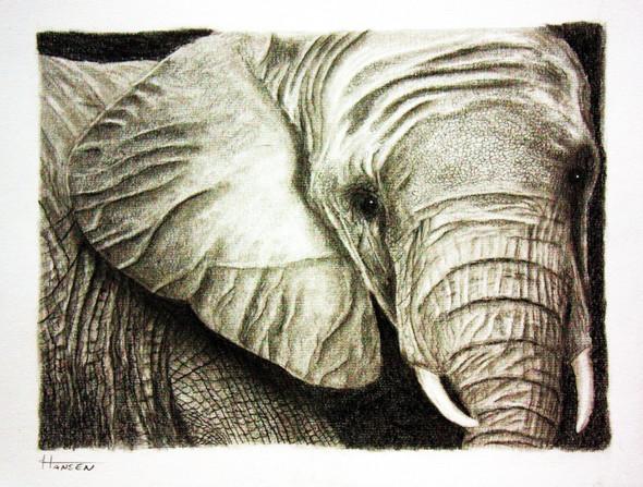 junger Elefant - (Kunst, zeichnen, malen)