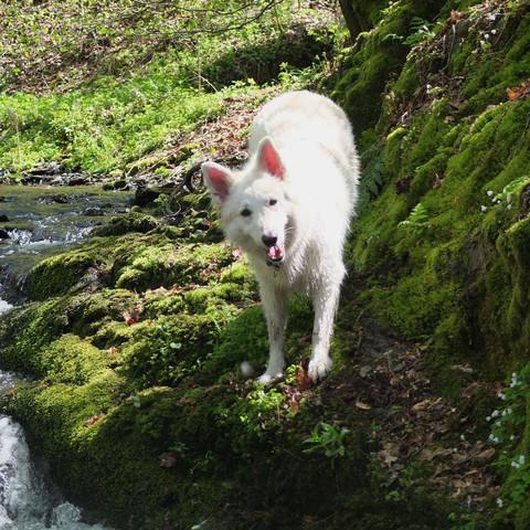da ist sie, ganz in ihrem Element ;) - (Hund, Unterschied, Wolf)