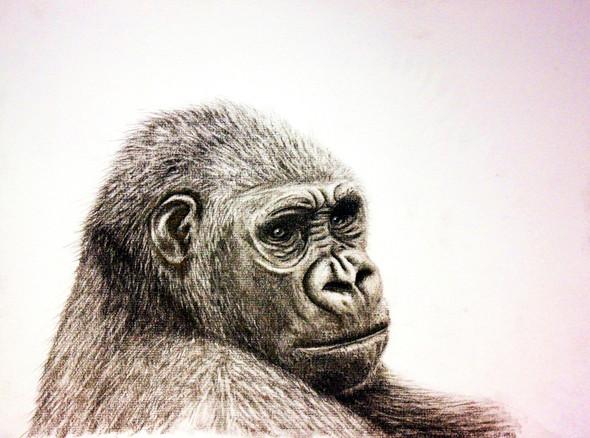 Gorilla - (Ideen, zeichnen, stifte)