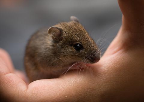 Kommt Eine Maus Aus Einem Eimer Raus Tiere