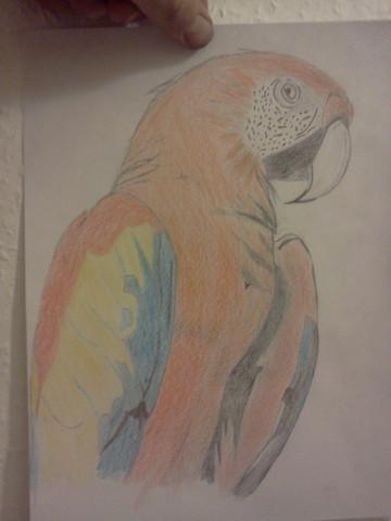 - (Ideen, Zeichnung)