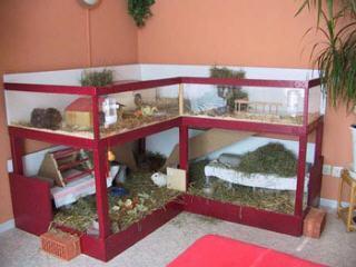 reicht der k fig f r 3 meerschweinchen haustiere. Black Bedroom Furniture Sets. Home Design Ideas
