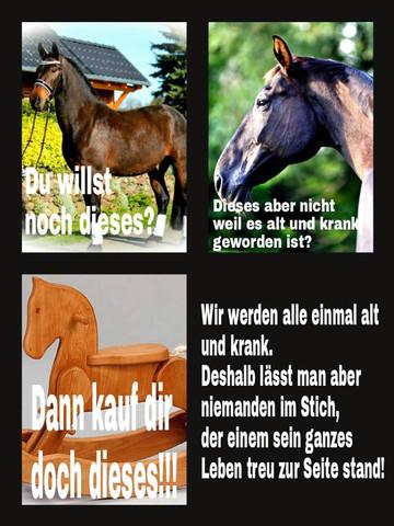 - (Tiere, Pferde, reiten)