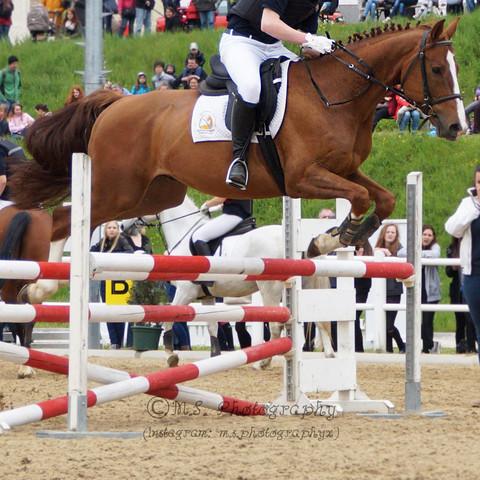 Bild.. - (Pferde, Pferdefotografie)