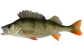 - (Natur, Fische, Food)