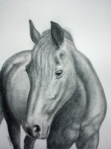 Habt Ihr Tipps Zum Zeichnen Eines Pferde Portrait Bleistift