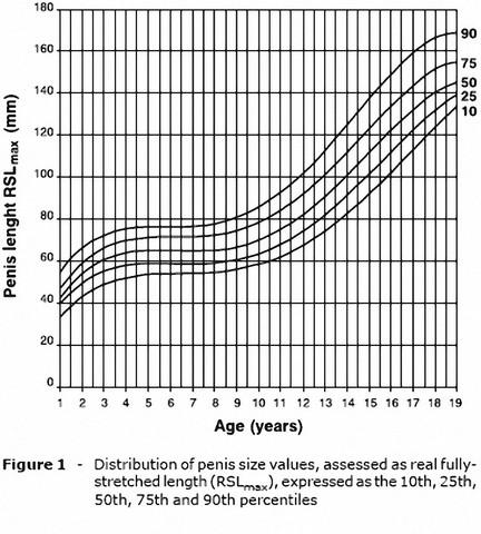 Wie lange wächst ein penis