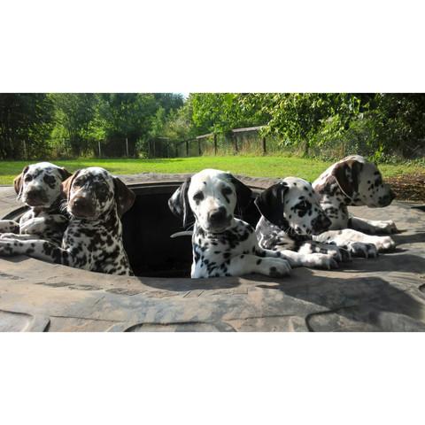 Unsere Kleinen. :) - (Hund, Rasse)