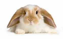 - (Alter, Kaninchen)