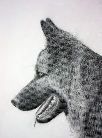 Schäferhund - (Meinung, zeichnen)