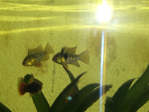 Die Fische - (Fische, Geschlecht)
