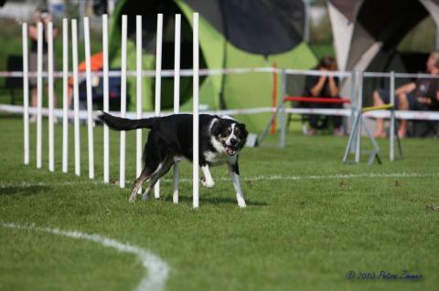 eins der schwersten - Slalom - (Hund, agility)