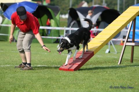die - Wippe - (Hund, agility)