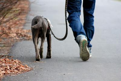 Labrador mit Halter (Uwe Schlick @pixelio.de) - (Job, Versicherung, Vertrag)