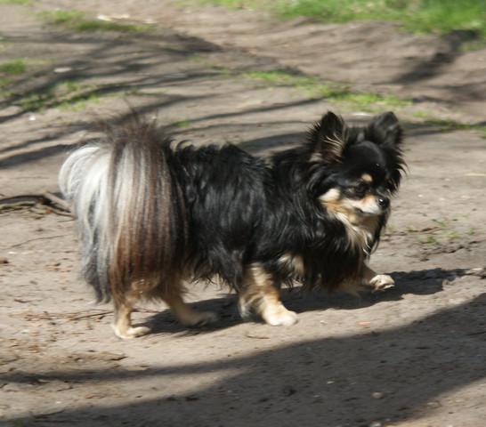 - (Hund, Größe, Meinung)
