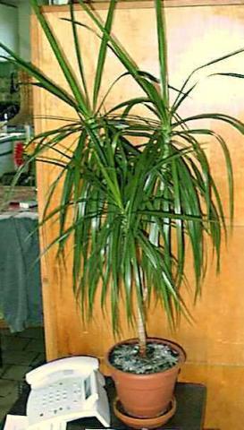 Pflanzen Im Badezimmer. Full Size Of Kleines Badezimmer Ohne Fenster ...
