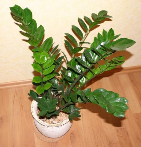 pflanze fürs badezimmer, irgendwas palmenartiges?! (pflanzen, palme)