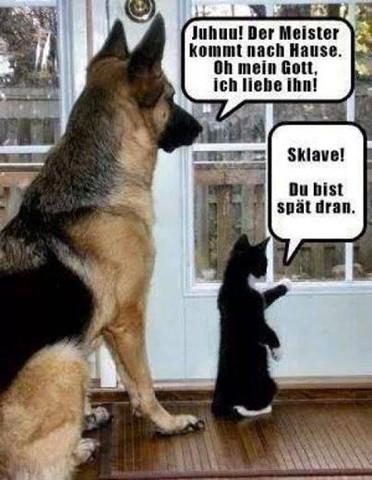 - (Hund, Katzen)