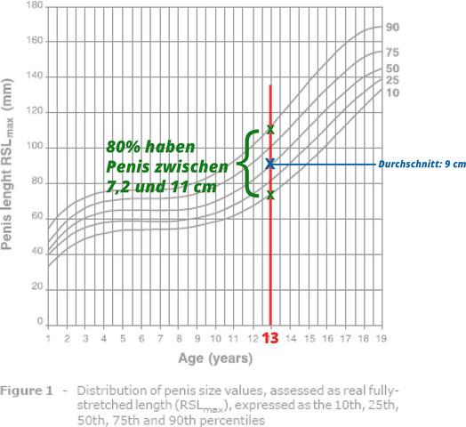 Durchschnittliche penis größe