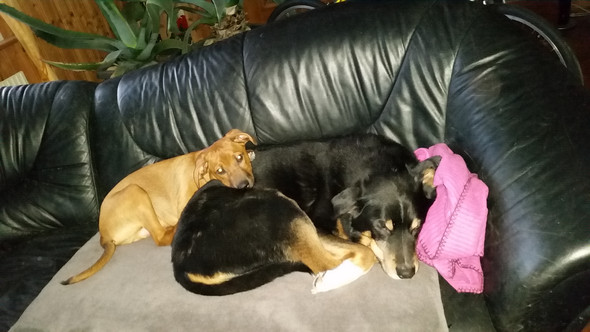 Rambo und Tibor - (Hund, Welpen)
