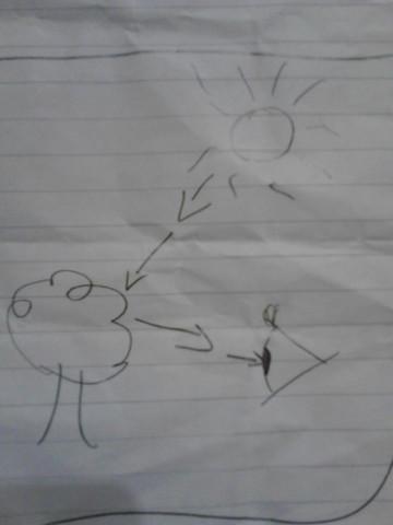 Das Licht wird reflektiert und fällt in's Auge - (Schule, Biologie, Lehrer)