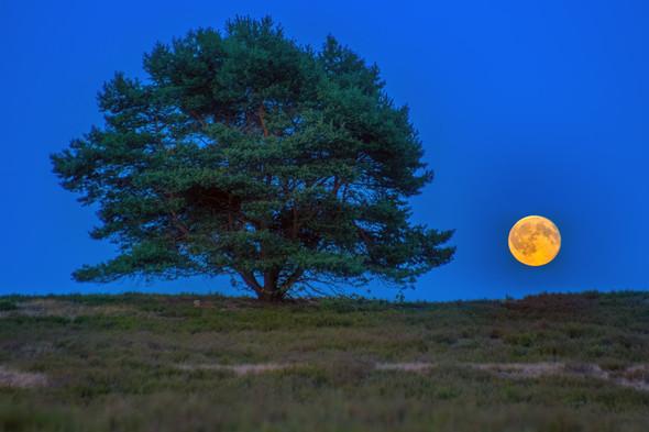 - (Foto, Mond)