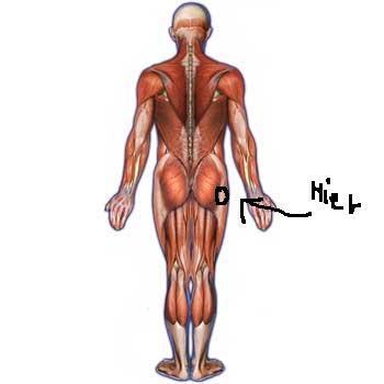 Die Perioden der Osteochondrose der Wirbelsäule