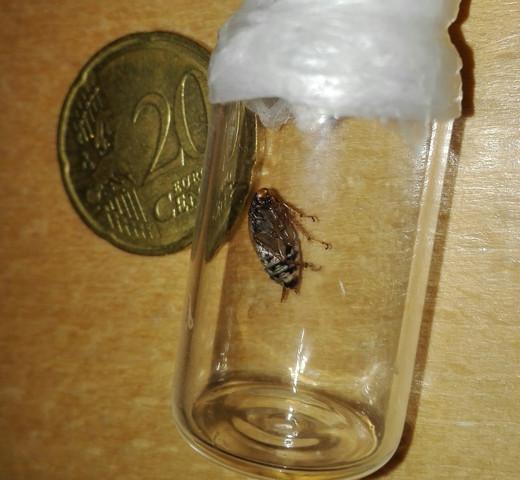 Unterseite - (Biologie, Insekten, Kakerlaken)