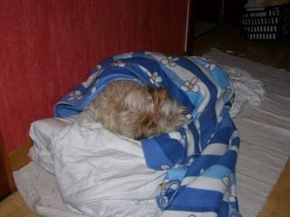 Bilduntertitel eingeben... - (Hund, schlafen, Sauerstoff)