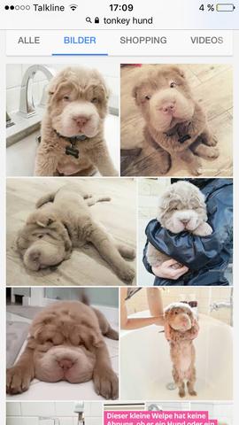 - (Tiere, Hund, Hunderasse)