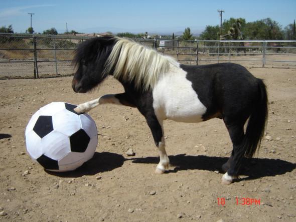 Eine nur damit siehst was ich meine. :) - (Mädchen, Fußball, Pferde)