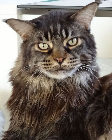 Ernesto - (Katze, Kater, Tapete)