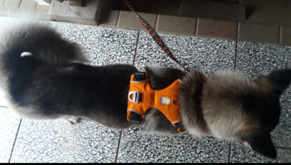- (Hund, Halsband, Hundegeschirr)