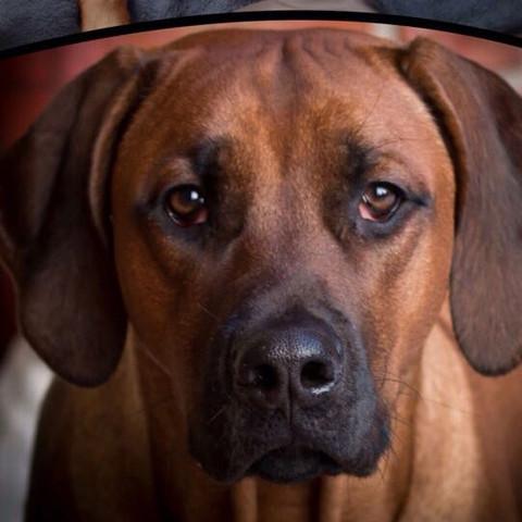 Unser großer   - (Hund, Erziehung, Aufgabe)