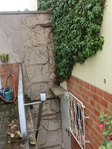 Efeu über Kellerabgang - (Haus, Garten, Efeu)