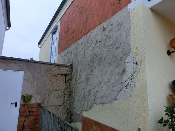 Wand nach Efeuentfernung - (Haus, Garten, Efeu)