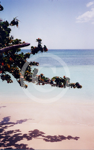 Tobago WI - (Urlaub, Genuss, Karibik)