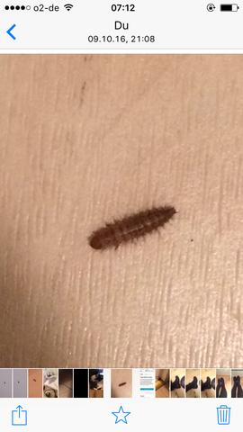 Wohnung braune der larven in Kleine braune
