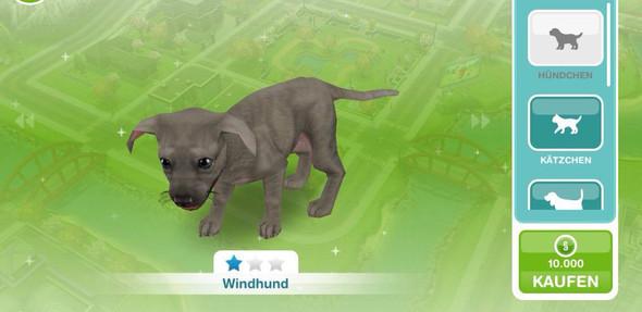 Sims Freeplay Windhund Welpe 10.000 Simoleons - (Spiele, Sims)