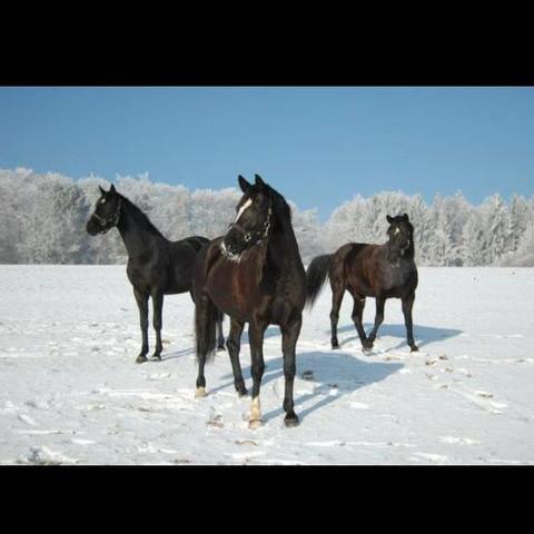 Im Winter auf der Koppel, da fühlt man sich wohl.🙈 - (Pferde, Fragen)