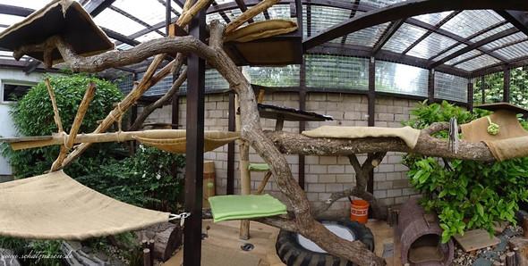 Katze aussengehege terasse selbst bauen haustiere katzen for Whirlpool garten mit rollrasen balkon katze