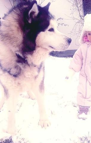 - (Aussehen, Hunderasse, Wölfe)