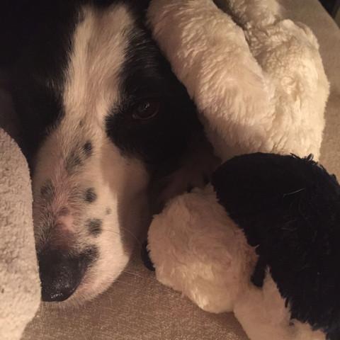 Bild 5 - (Hund, Welpen, Gefrierschrank)