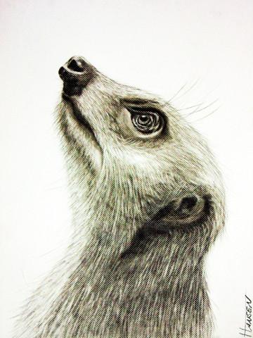Erdmännchen - (Kunst, zeichnen, malen)