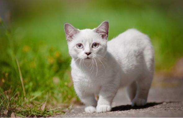 - (Tiere, Bilder, Katze)