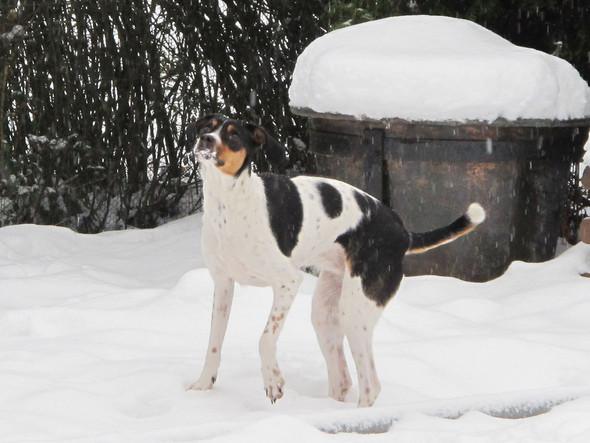 13 kg - (Hund, klein, Hunderasse)