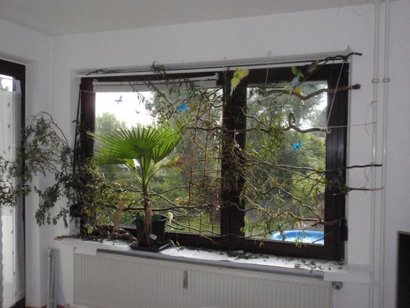 - (Pflanzen, Zimmer, Wellensittich)