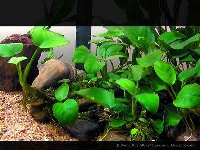 Bilduntertitel eingeben... - (wohnen, Fische, Aquarium)