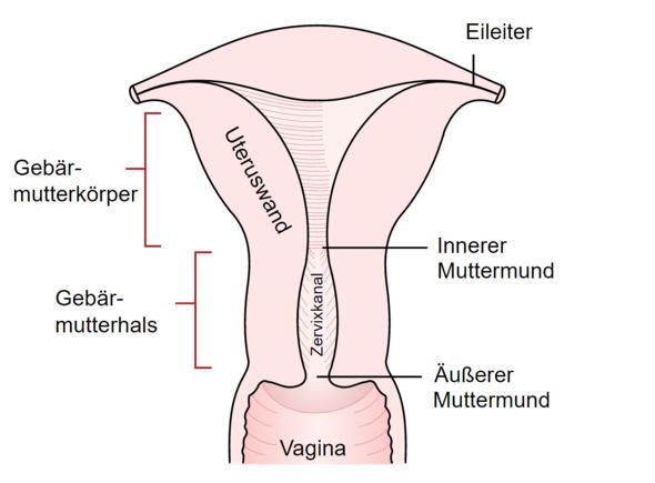 Fingern muttermund Muttermund finden