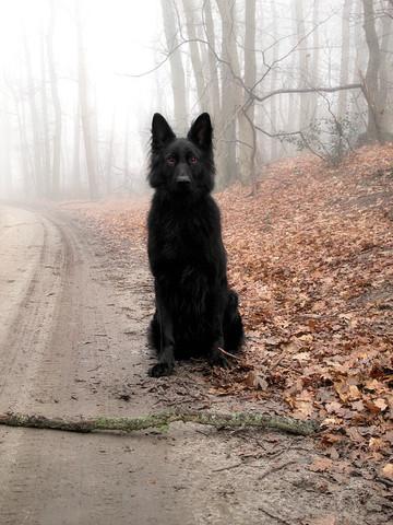 So unfähr sah der Hund aus - (Film, Hund, Serie)